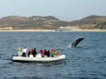 Whale Spotting off of Baja