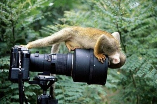 A monkey peers into the camera lens.